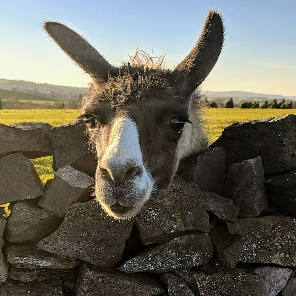 8 Farm Parks in Yorkshire - Animal Encounters and Outdoor ...
