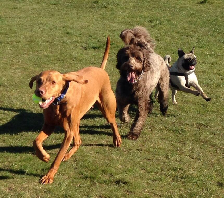 Apperley Dogs and Cats