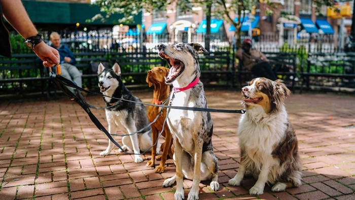 Dog-Walkers-in-Bradford