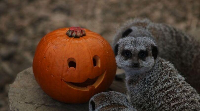 Halloween at Ponderosa zoo