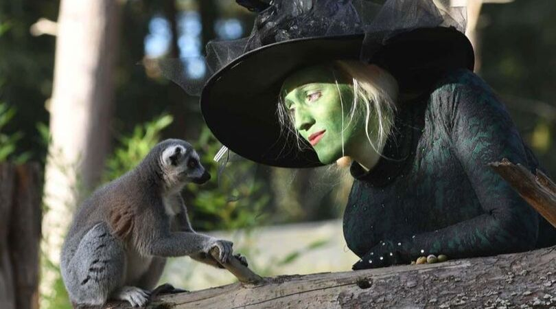halloween at Yorkshire wildlife park
